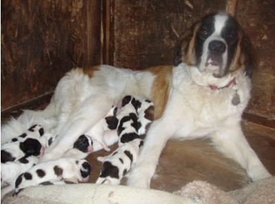 Mamma Kootenai and her babies
