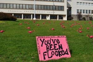 a flocking of shocking pink