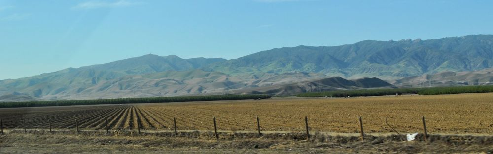 My attempt to make the Central Valley look beautiful. (Luckily the photo doesn't capture the stinky cow poop smell.)