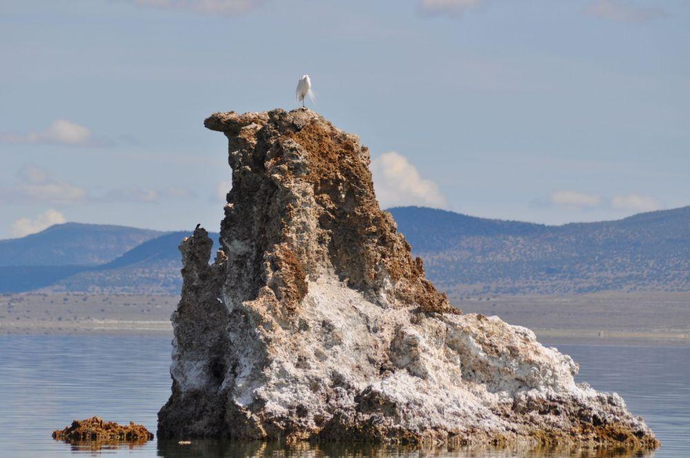 A snowy egret perched atop a tufa spire