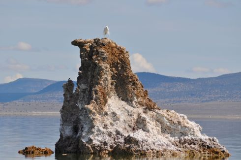 A snowy egret perched atop a tufa spire