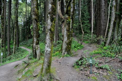 Trails in Forest Park are irresistible. Like this. Could you stand here and NOT pick a path and walk?