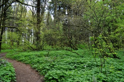 Path through a decadent green carpet