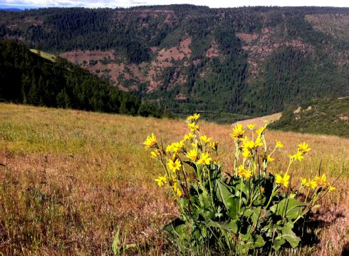 wildflowers on a ridge above the Klickitat River