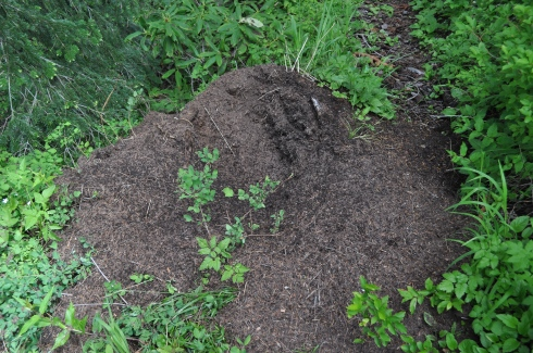There were many ginormous anthills seething with trillions of ants!