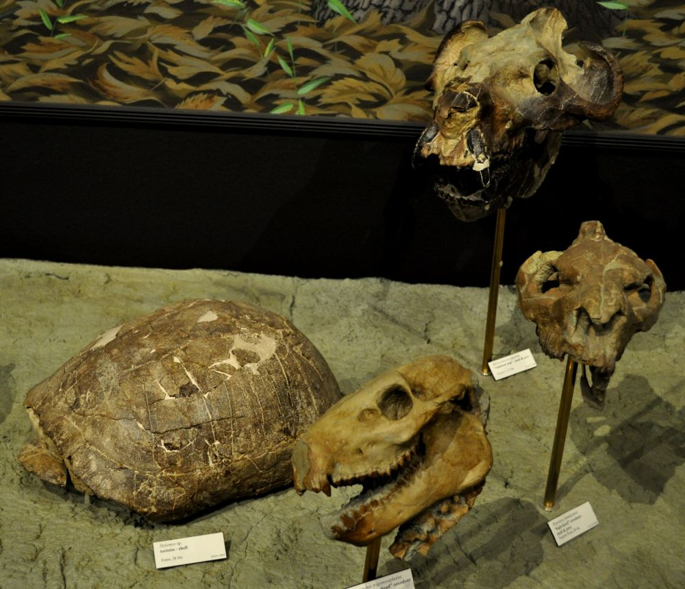 dinosaur heads and turtle shell