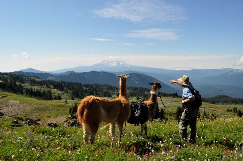 Here is a shot from our trip to the Andes, with llamas and their keeper.