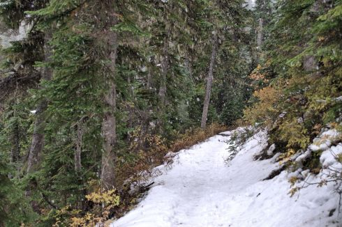 Snow starts to come down hard as I realize our destination is a much higher elevation.