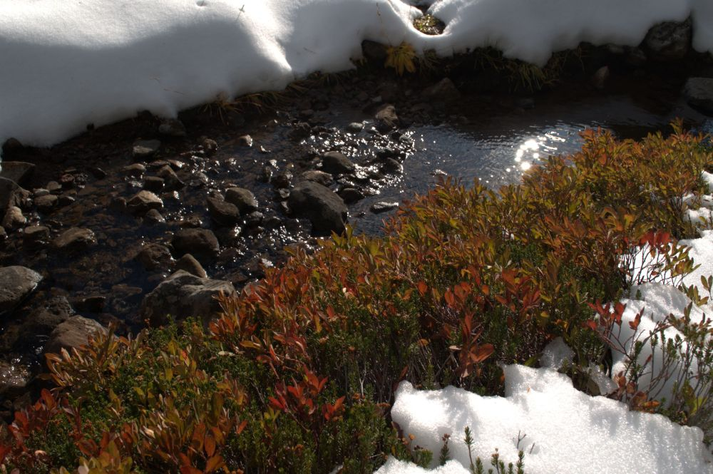 Fall colours still visible in the snow