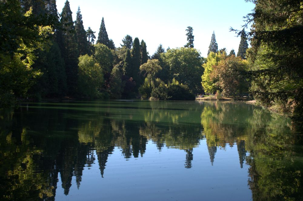Island in a lake at Laurelhurst Park in Portland, Oregon
