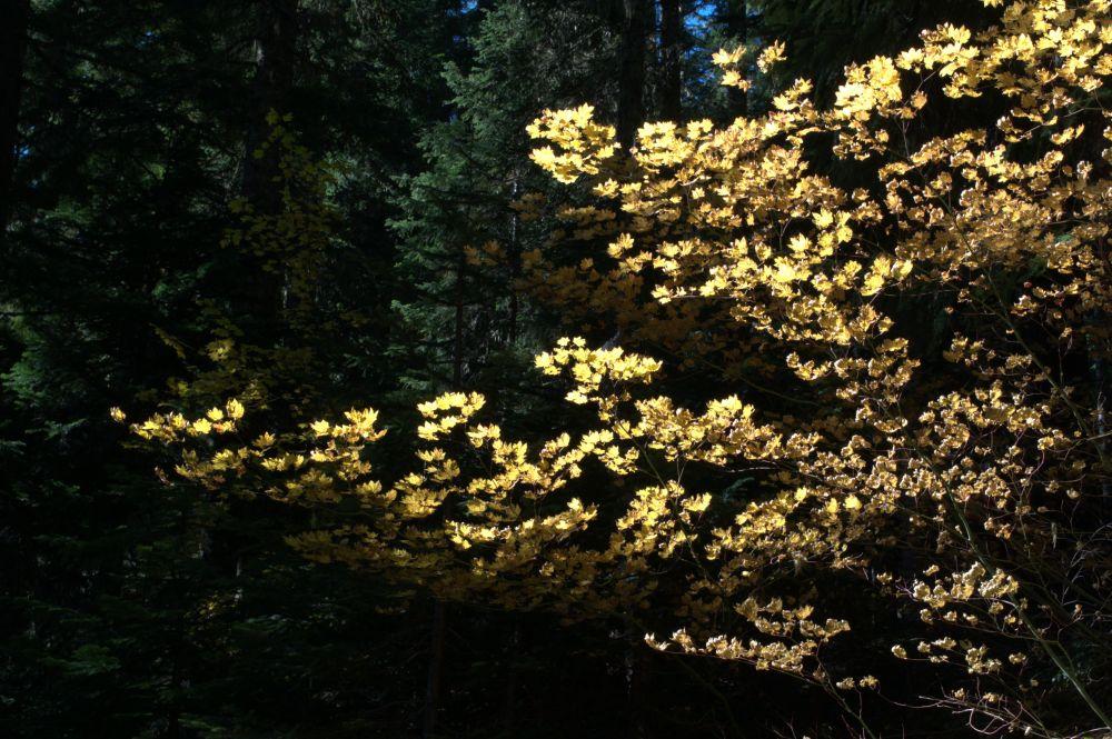 Sun through leaves near the trailhead