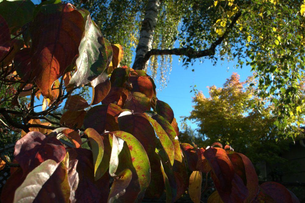 Autumn colours! Irresistible.