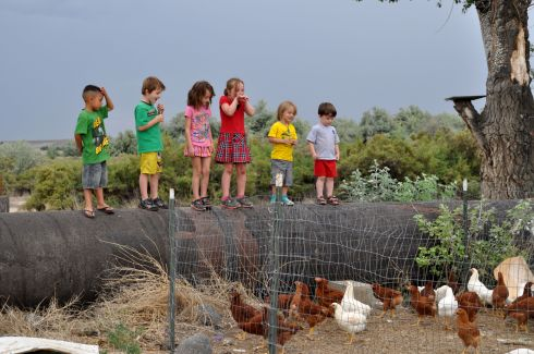Kids in Idaho line up on a pipe to watch chickens, 4th of July, 2013