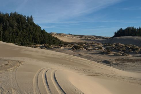Sand dunes and tree islands near the mouth of the Umpqua River