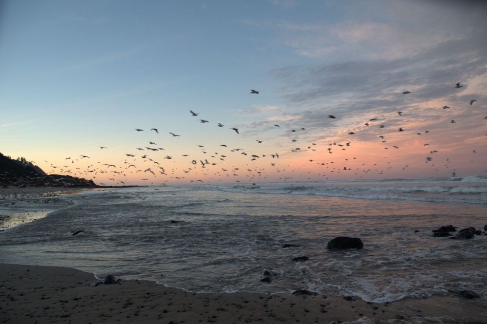 Sunrise and seagulls from Stonefield Beach