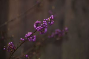 gorgeous purple beads