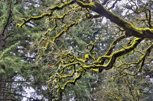 Mossy snaking vines through the sky