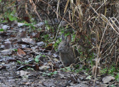 Rabbit has it's eyes on us