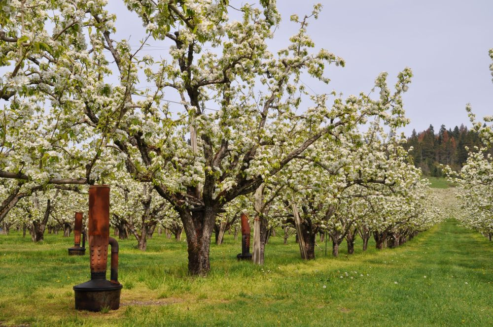 Heaters in an orchard.