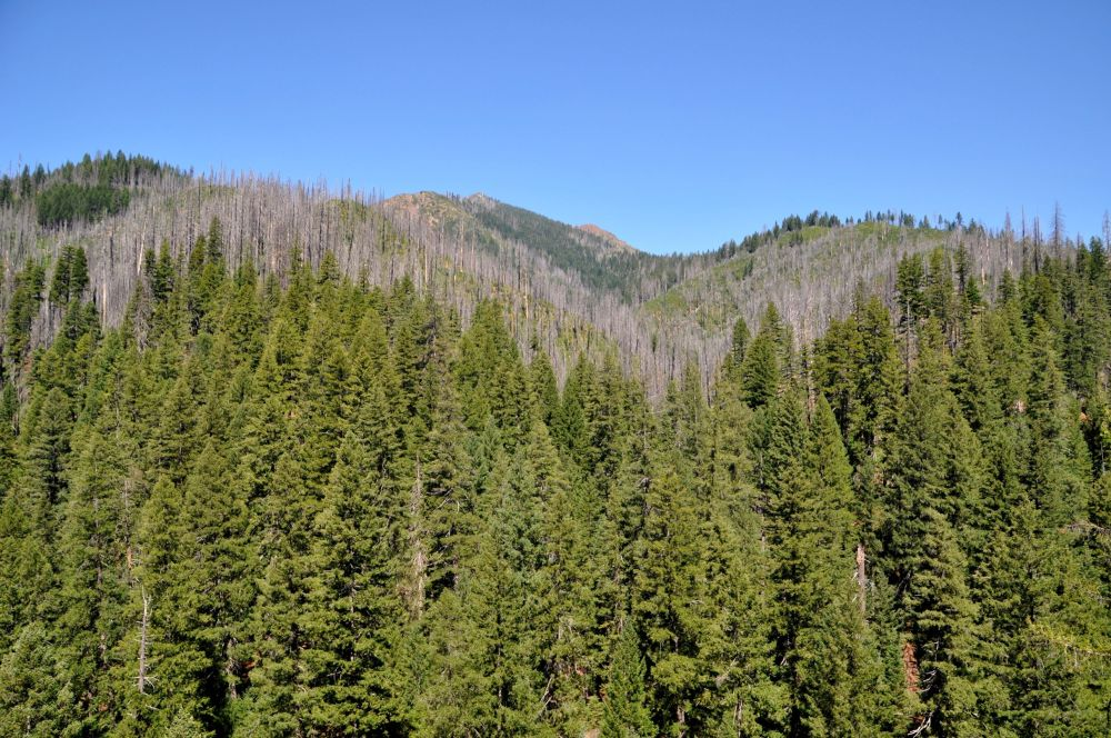 Naked spikes of trees from an old forest fire crest the peaks.