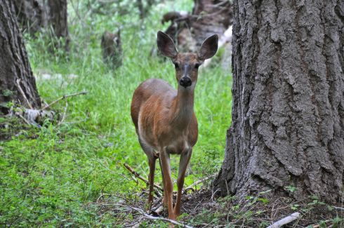 A deer watches me with curiosity, and perhaps a little hope that I'll spill some food.