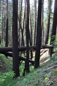 A natural life cycle of a forest includes fires.