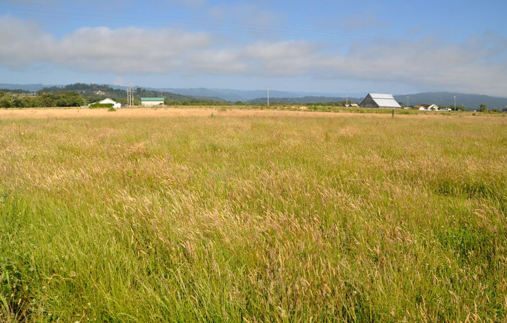 Fields and farmland near McKinleyville, California