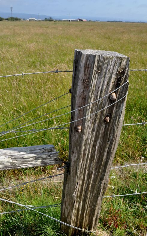 I'll bet one does not find many snails on the fence posts of Kansas.