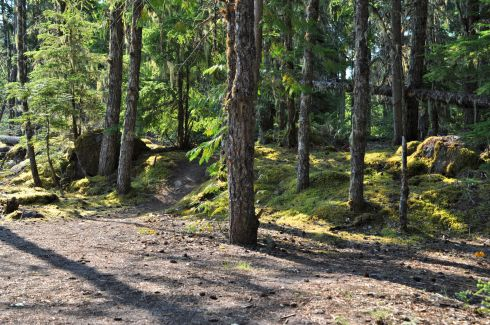 Mossy bank with trail leading to the campsite.