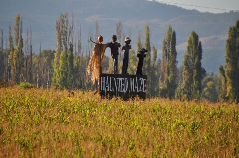The Haunted Maize is operational at night, and we didn't stay late enough.