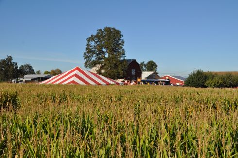 What you see here is a whole lotta corn. Plus some stuff in the distance...