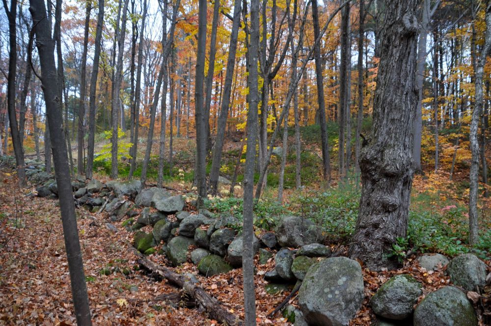 Old stone wall in a Massachusetts forest.