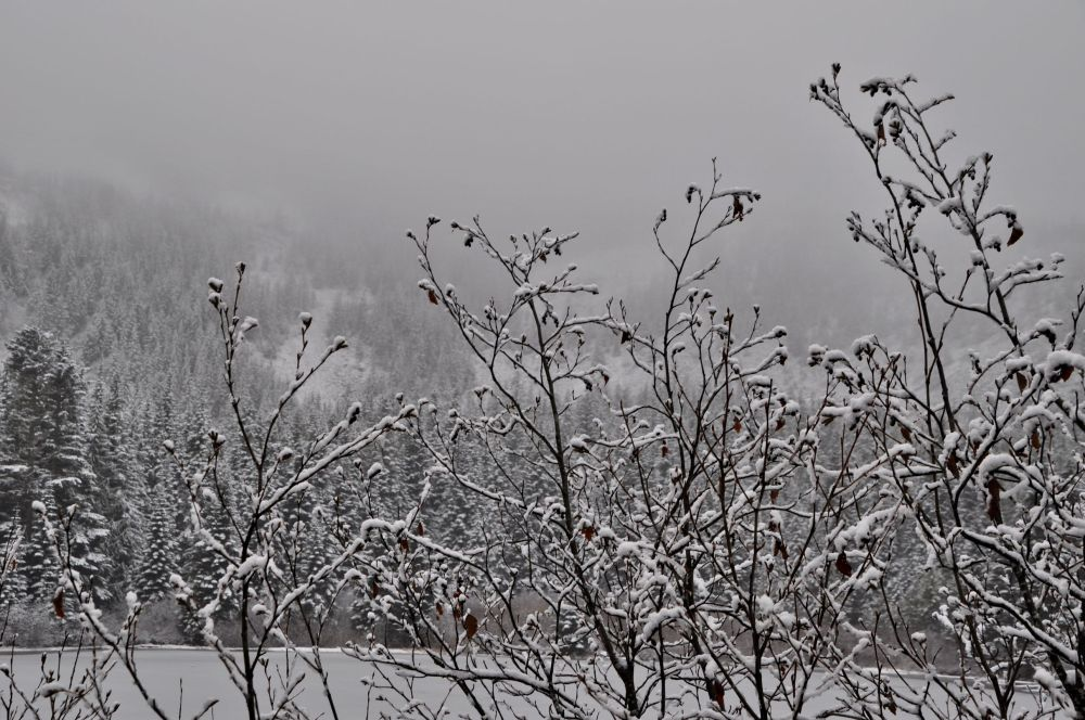 Fresh snow was falling and decorating branches around the lake.