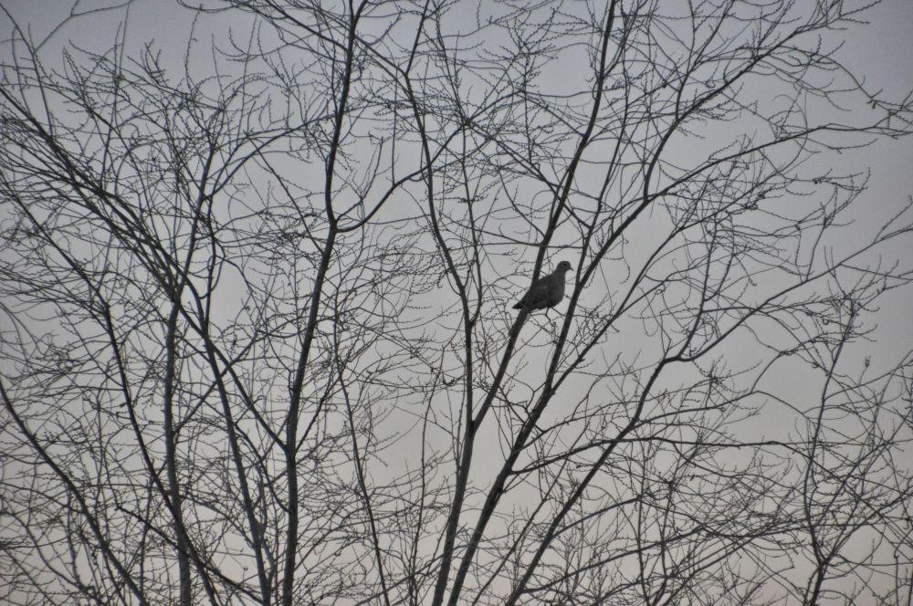 Dove waits for sunrise.