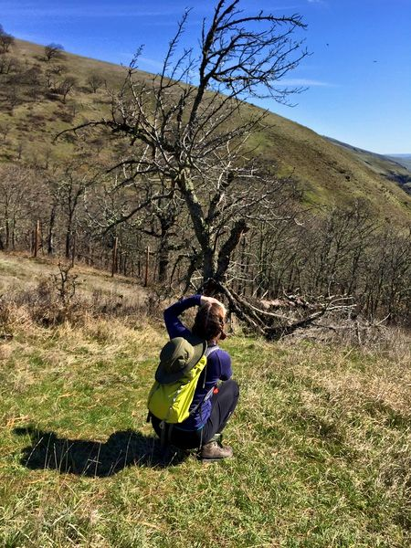 This is me, photographing one of the ancient Cherry trees for which the trail takes its name. Thanks to the group leader S for the photo!
