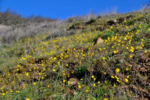 I was surprised at how many wildflowers were bursting to life so early in the season.