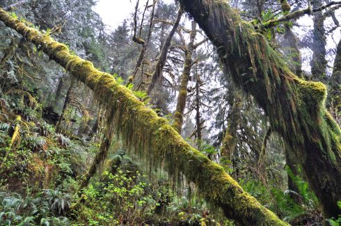 Rainforest trees look like the long hairy arms of a green ape.