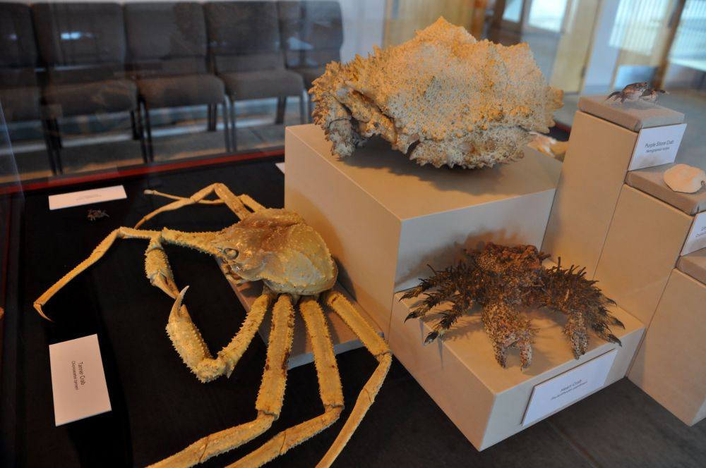 There were entertaining displays inside the ferry building, such as this crab display.