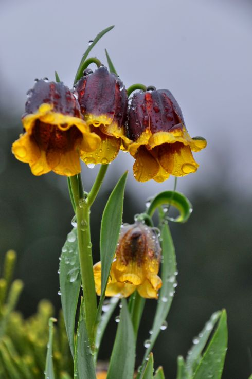bells in the rain