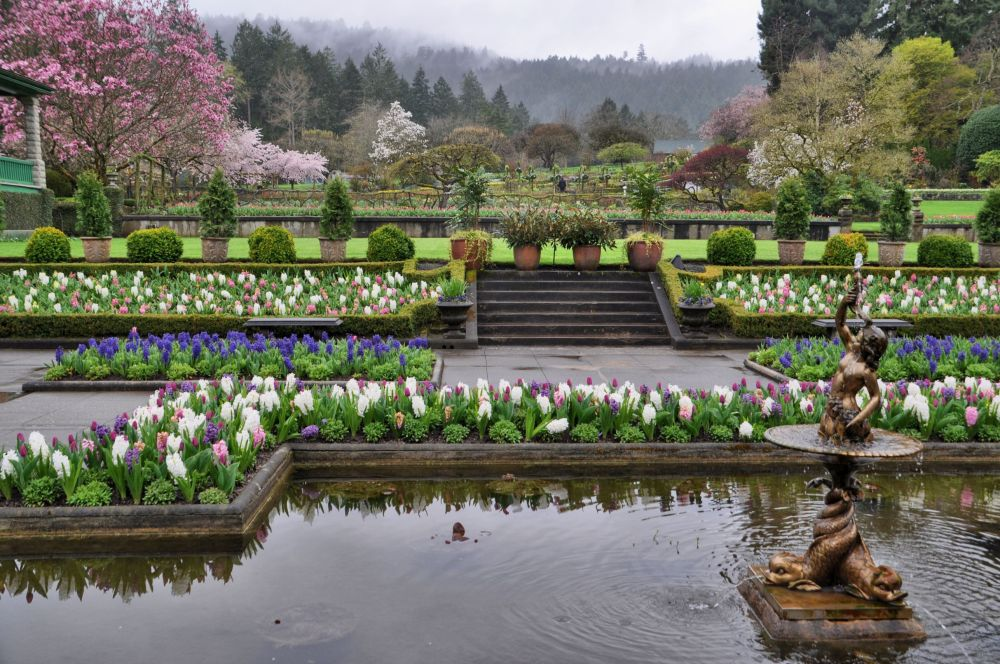 The Butchart Gardens in March offer a mood of dark quiet, wisps of foggy intrigue, and solitude.
