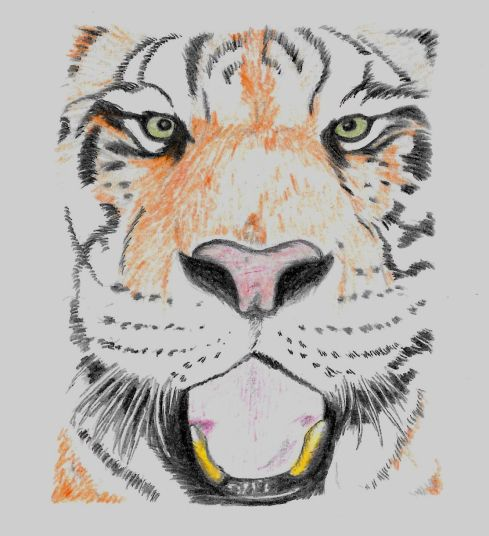 My Siberian Tiger in full colour.
