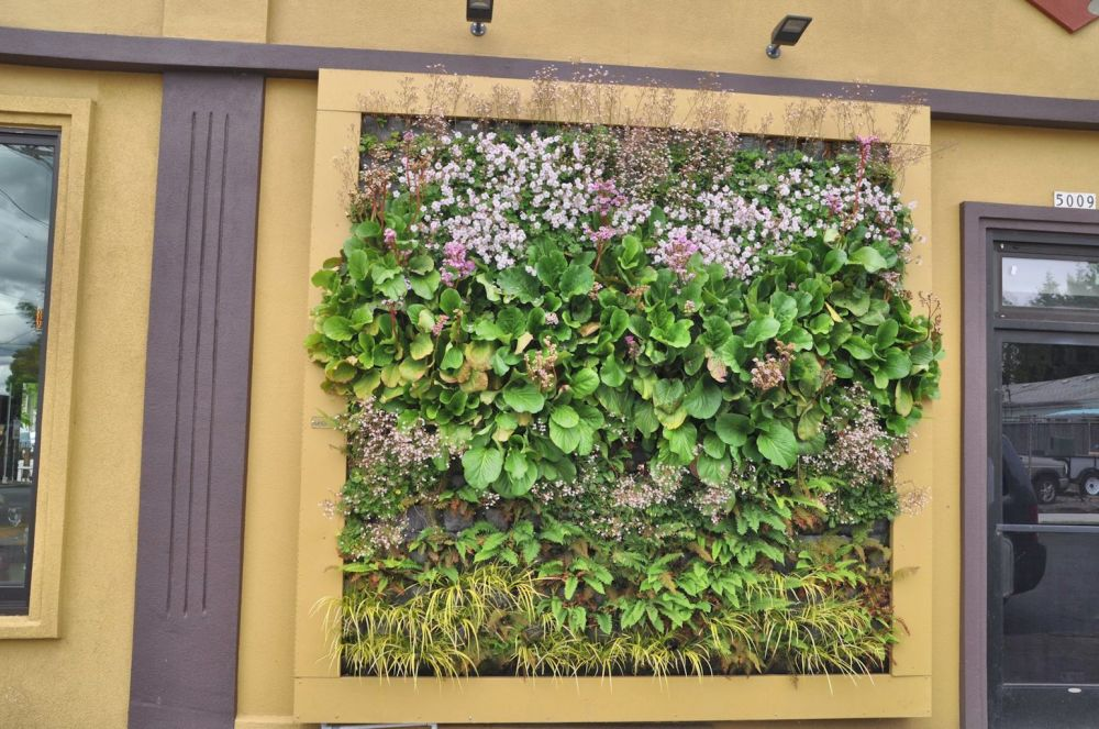 The living wall of a business on Alberta Street.