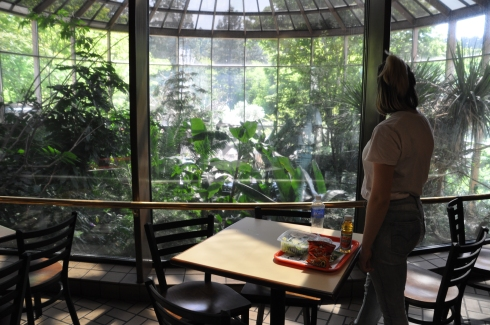We stopped for a late lunch at the Africa Cafe, built with a view of the aviary so we watched the birds fly around while we ate.