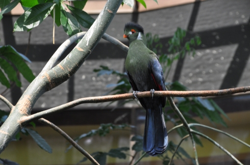 One of the lovelies inside the aviary.