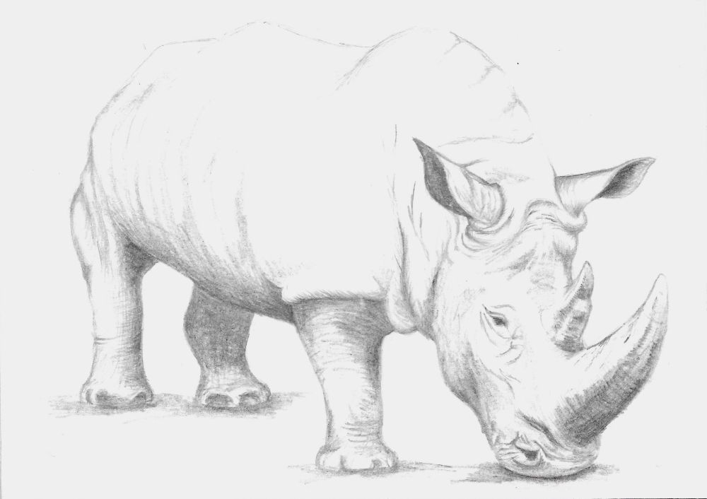 My rhinoceros. I love how it turned out.