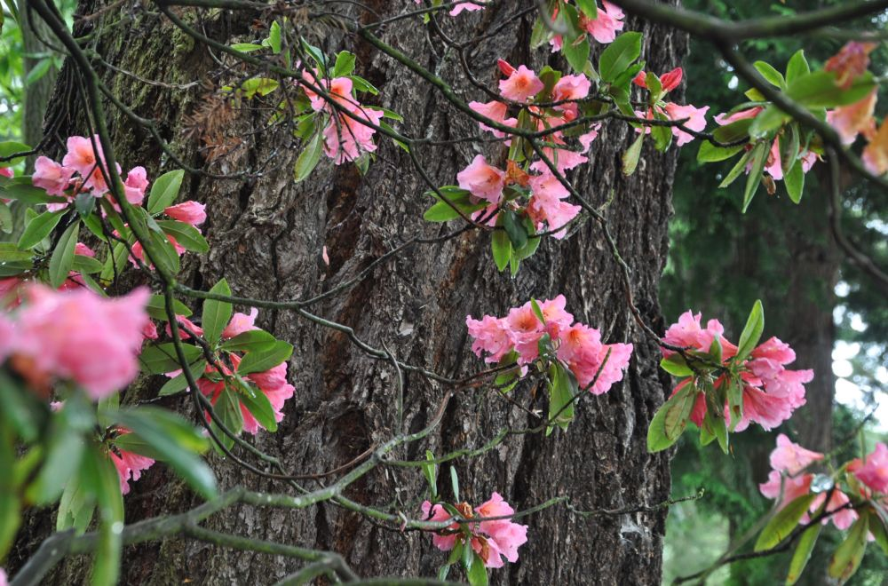 The pink is lovely against the tree trunk.