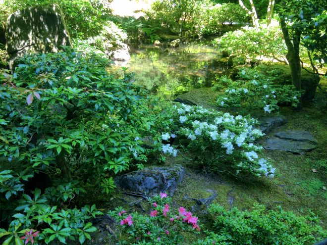 It was past peak spring colour, but these azaleas still added a spark to the shady greenery.