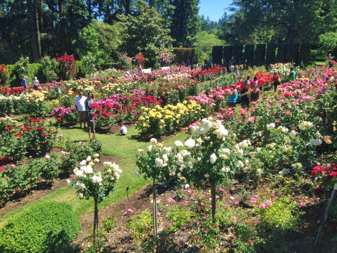 Looking down onto the Rose Test Garden.