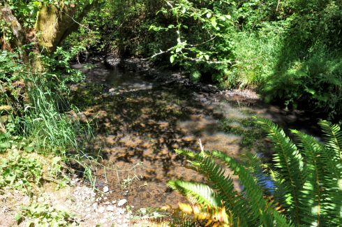 A year-round creek has trout and crawdads.