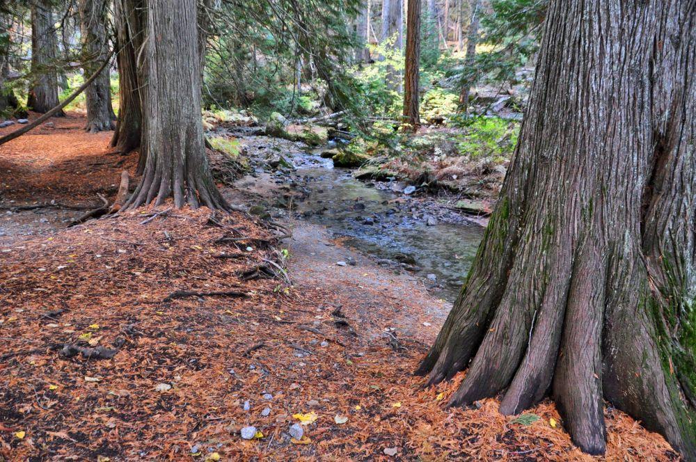 Cedar trees reach their fingers out to soak up a bit of Snow Creek.